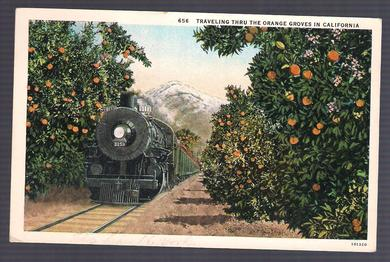 656. TRAVELING THRU THE ORANGE GROVES IN CALIFORNIA.